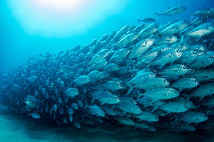 Unduh 9600 Gambar Ikan Ikan Di Laut HD Terbaik