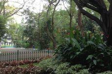 Menilik Hutan Kota Srengseng, Wisata Menikmati Alam di Jakarta Barat