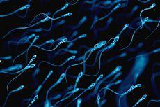 Apakah Sperma Bagus untuk Masker Muka?