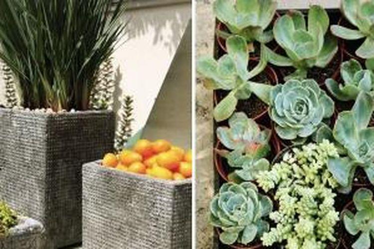 Ilustrasi. Kunci sukses merawat tanaman sebenarnya tidak rumit. Claire Bock, seperti dikutip dalam Apartmenttherapy.com punya cara ampuh dan sederhana untuk merawat tanaman di rumah Anda.
