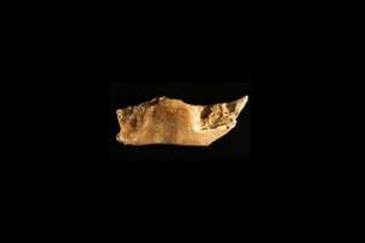 Tulang rahang yang memberi petunjuk keberadaan manusia purba tertua di Flores.