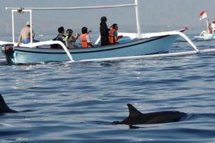 Lumba-lumba merupakan daya tarik wisatawan di Pantai Lovina, Kabupaten Buleleng, Bali.