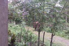Kawanan Gajah Liar Serang Penduduk di Pedalaman Pidie, 4 Anak Pingsan