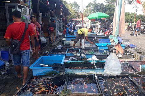 Omzet Penjual Ikan Hias Jatinegara Turun Drastis Selama Kemarau