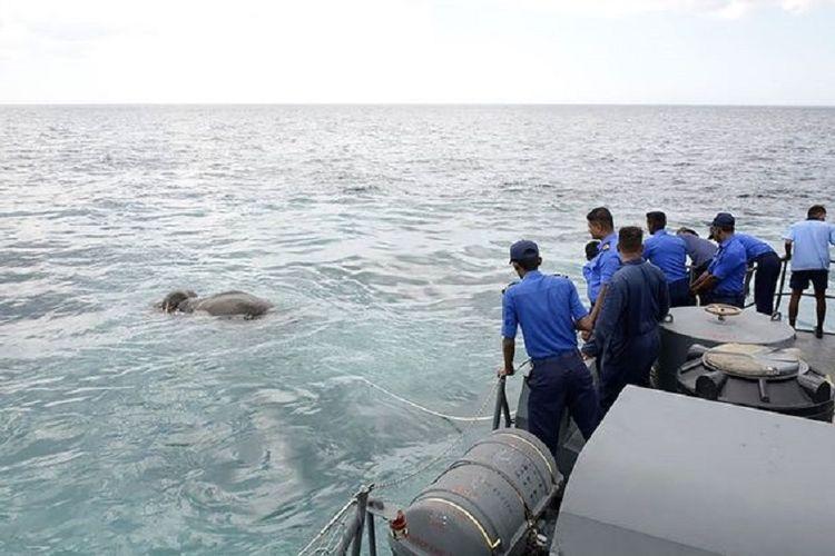 Gajah diselamatkan dari laut di Sri Lanka