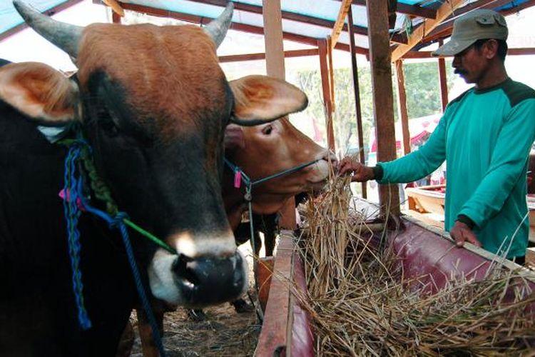 Menjelang Hari Raya Idul Adha, penjual hewan kurban mulai menjajakan dagangan mereka.