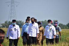Jokowi Senang Produktivitas Padi Tinggi dan Harga Gabah Naik