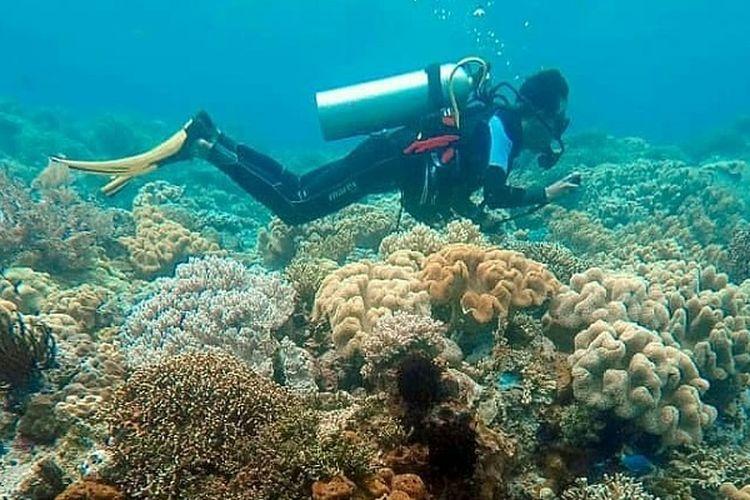 Penyelam atau diver sedang menikmati keindahan bawah laut di perairan Wakatobi
