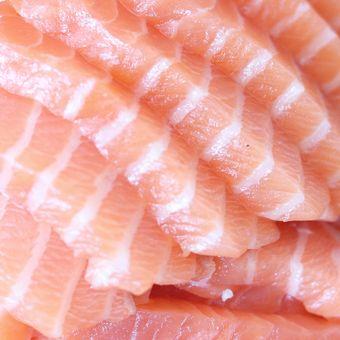 Ilustrasi ikan tuna.