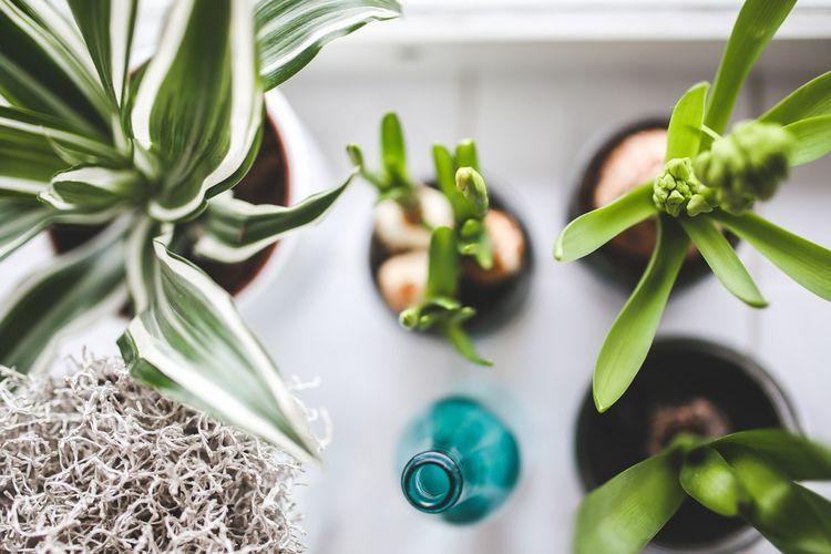 Ilustrasi tanaman hias