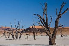 Pemandangan Sureal Deadvlei di Gurun Namib, Gersang namun Indah