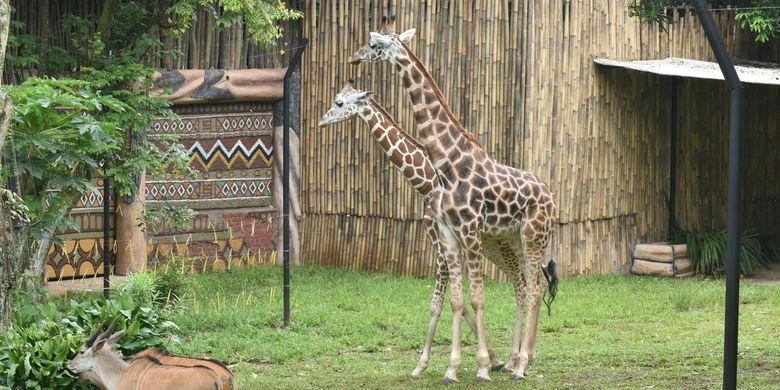 Kebun Binatang Bandung Terancam Potong Rusa untuk Pakan Satwa Halaman all -  Kompas.com