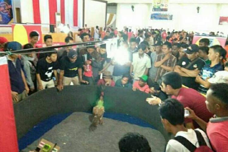 Kontes sabung ayam di kantor gabungan dinas-dinas pemda polman sulawesi barat dibubarkan paksa polisi karena tidak mengantongi Izin.