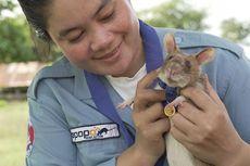 Tikus Punya Kemampuan Deteksi Ranjau, Kok Bisa?