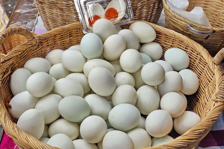 Ilustrasi telur bebek