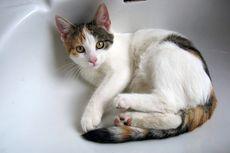Dosen IPB Ungkap Manfaat Sterilisasi pada Kucing