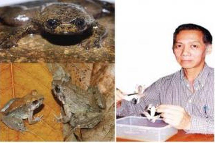 Djoko Tjahjono Iskandar bersama dua spesies temuannya yang menggegerkan dunia, Barbourula kalimantanensis (kiri atas) dan Limnonectes larvaepartus (kiri bawah)