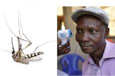 Pria Uganda Mengaku Bisa Bunuh Nyamuk dengan Kentut, Ini Faktanya