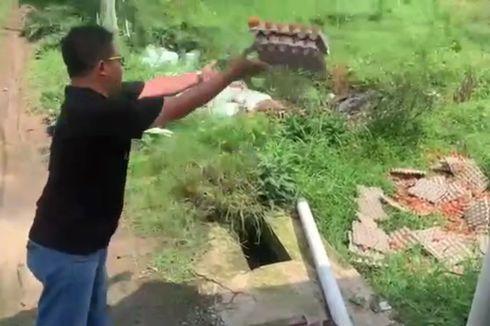 Kesal Harga Turun, Seorang Peternak Buang Telur Ayamnya ke Sawah, Videonya Viral