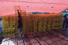 Pengiriman Manggis Tasikmalaya ke China Dihentikan Akibat Wabah Virus Corona