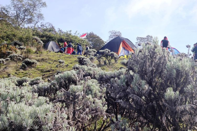 Kemah para pendaki di kawasan savana Suryakancana, Gunung Gede Pangrango, Jawa Barat. Pihak pengelola menutup kawasan konservasi itu dari aktivitas pendakian umum selama tiga bulan terhitung 31 Desember hingga akhir Maret 2020.