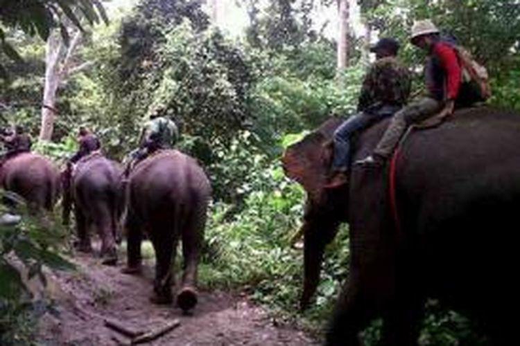 Empat ekor gajah terlatih melakukan pencarian kawanan gajah liar di pegunungan Pante Peusangan, Kecamatan Juli, Kabupaten Bireuen. (DESI)