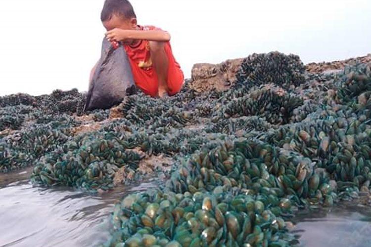 Seorang anak tengah berkutat dengan sekumpulan kerang hijau di Sungai Buntu, Karawang.