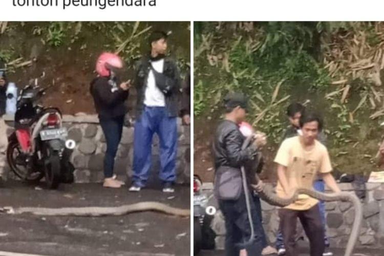 Warga menunjukkan ular king kobra di handphone miliknya. Ular tersebut jatuh dari pohon ke Jalan Raya Bandung-Cirebon tepatnya di kawasan Cadaspangeran, Sabtu (21/12/2019) sore. AAM AMINULLAH/KOMPAS.com