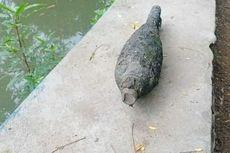 Heboh, Pemulung Temukan Mortir Aktif di Sungai, Diledakkan di Tengah Sawah