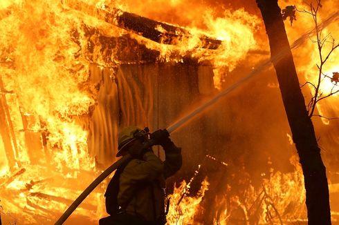 Berniat Bakar Sarang Lebah Malah Picu Kebakaran Hutan California