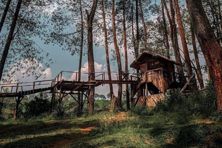 Area wisata Hutan Pinus Rahong