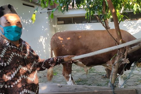 Warga Desa di Pegunungan Menoreh Akan Terima Sapi Kurban dari Jokowi