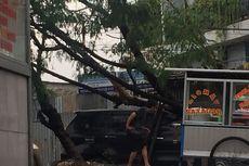 Pohon Tumbang Timpa Mobil Avanza di Kelapa Dua Depok