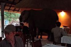 Keluarga Gajah Terekam Menginvasi Hotel di Zambia untuk Sarapan