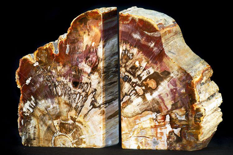 Ilustrasi petrified wood atau fosil kayu