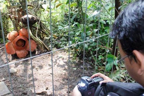 Sambut Pengunjung, Kebun Raya Bogor Berbenah