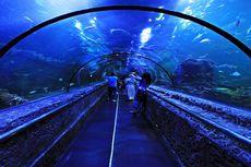 Seaworld Ancol dan 2 Wahana Lain Beri Kejutan Seru di Hari Lebaran