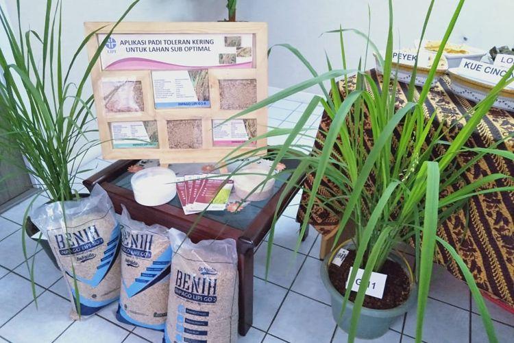 Varietas unggul padi gogo yang dikembangkan LIPI