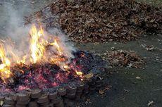 Membakar Daun yang Berguguran Adalah Hal Berbahaya, ini Alasannya