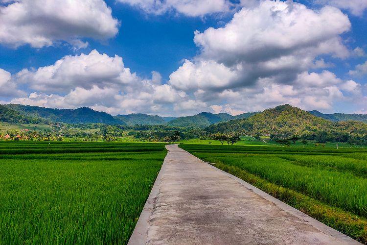 Perpaduan persawahan dan perbukitan di Pronosutan View, Kulon Progo.
