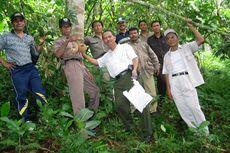 Bibit Durian Si Gundul Dibudidayakan di Taman Buah Mekarsari Bogor