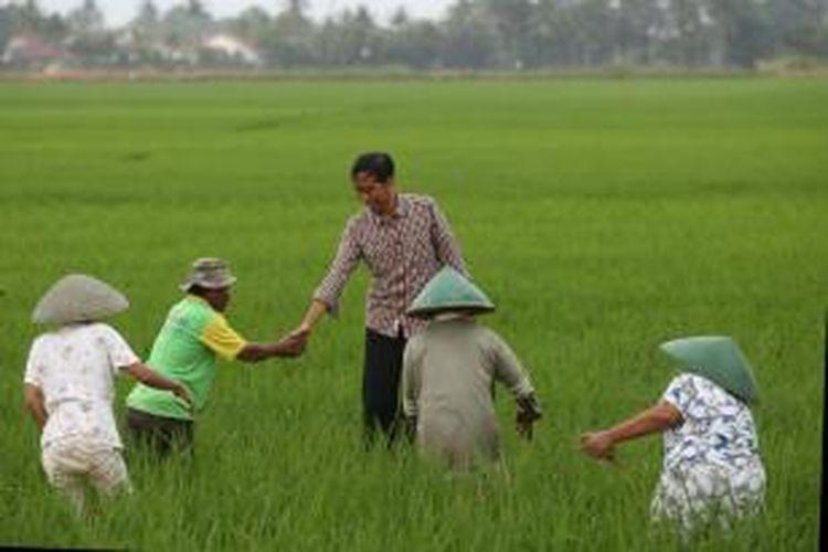 Capres nomor urut 2, Joko Widodo (Jokowi) berdialog dengan petani di Desa Gentasari, Kroya, Cilacap, Jawa Tengah, Jumat (13/6/2014). Dialog dilakukan Jokowi guna mengetahui berbagai masalah seputar pertanian yang dihadapi petani.