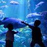 Mau Lihat Hewan Bawah Laut dari Rumah? Yuk Ikut Tur Virtual Ancol