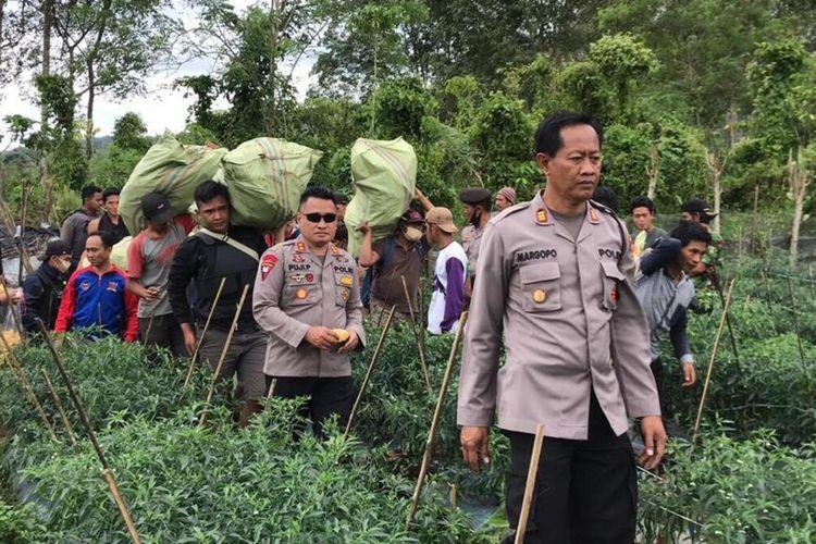 Polisi amankan ratusan batang ganja di Bengkulu