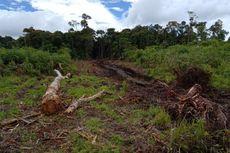 Akibat Penebangan Hutan Secara Liar