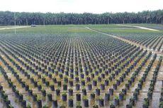 Dunia Butuh Minyak Sawit Indonesia