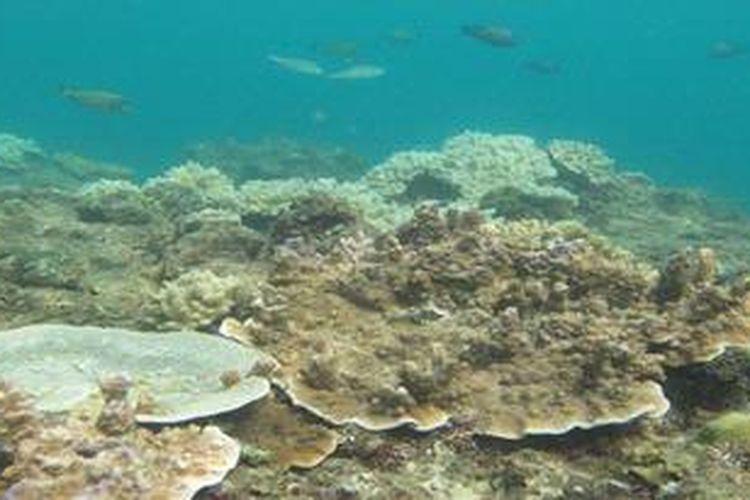 Ikan-ikan indikator, Minggu (14/10/2012) terlihat di perairan Teluk Buo, Kota Padang, Sumatera Barat. Kerusakan terumbu karang di sebagian kawasan perairan itu membuat konsentrasi ikan indikator relatif berkurang.