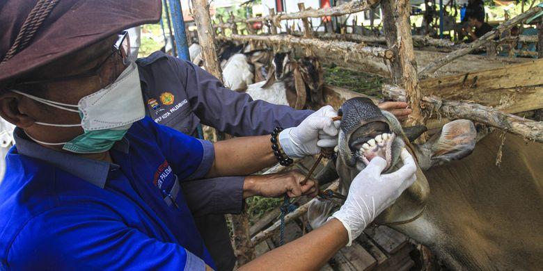 Terbaru, Idul Adha, Pemerintah: Pasokan Hewan Kurban Sangat Mencukupi