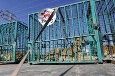 Tiga Ekor Singa Milik Kebun Binatang Gaza Dikirim ke Jordania