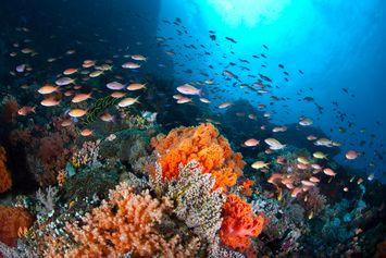5 Cara Menjaga Kelestarian Sumber Daya Laut